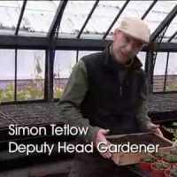 Simon Tetlow
