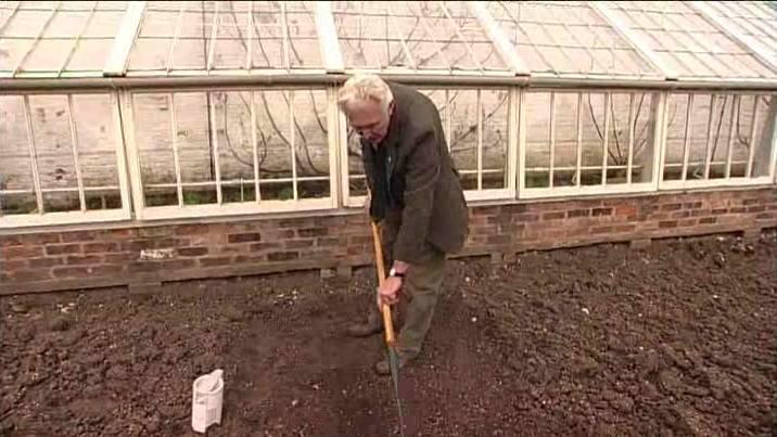 Sowing Parsley