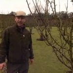 Winter Pruning Fruit Trees