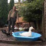 Keeping Ducks in Back Garden