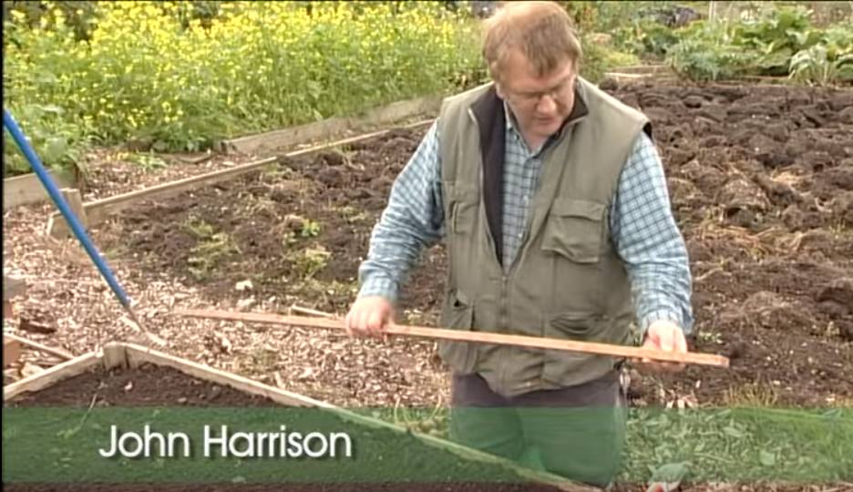How To Plant Shallots