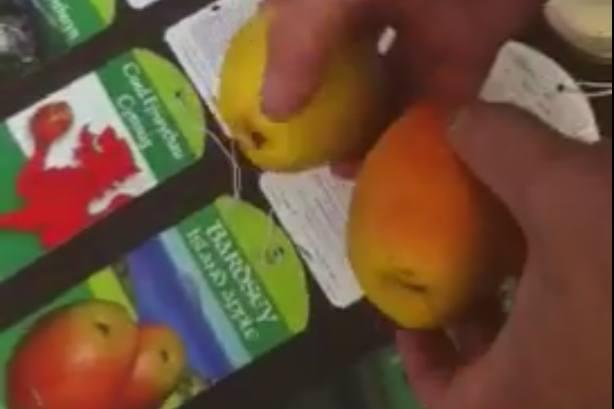 Welsh Apple Varieties