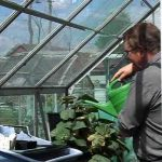 Greenhouse Watering